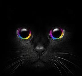 Gesicht der schwarzen Katzen – #hintergrundbildertiere