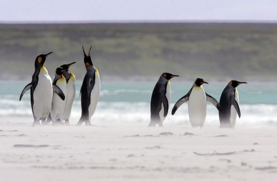 #Punta Tombo Chubut Province, #Argentina Along with the majestic nature that visitors can experience while visiting #Patagonia, there are some unique opportunities to see animals. @Getupandgotours Via: http://www.getupandgo.in/adventure-trips/