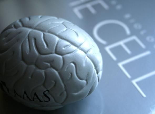 Cogmed Werkgeheugen Training | NeuroScan
