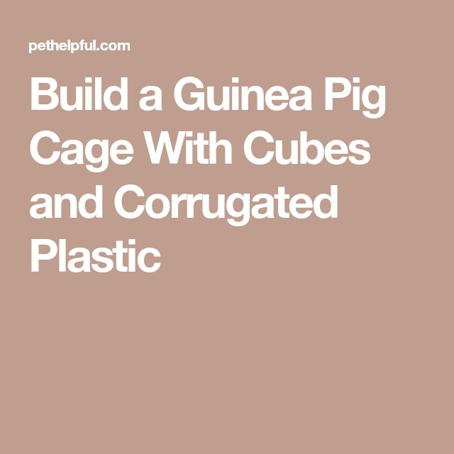 how to make coroplast guinea pig cage
