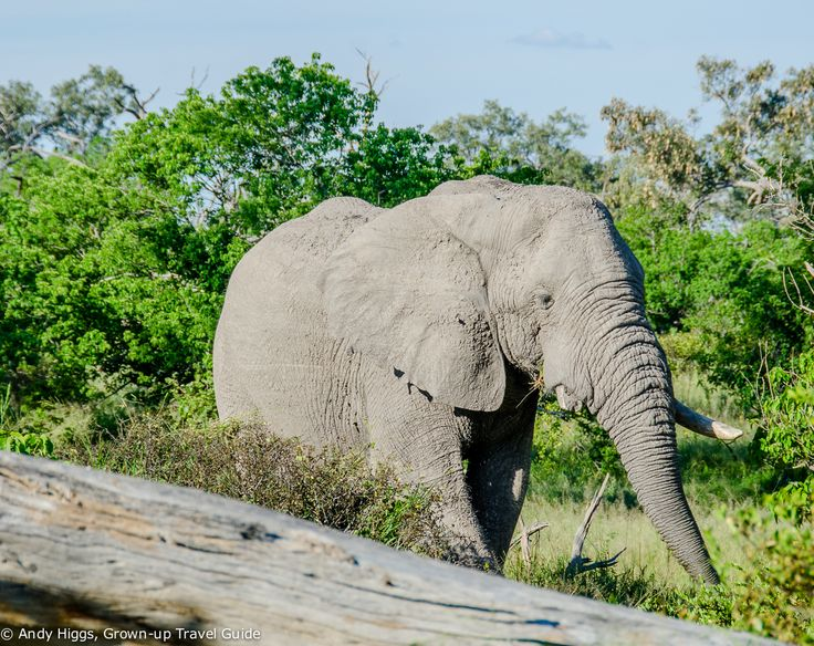 An unforgettable Botswana safari: Part 2 - Moremi Game Reserve