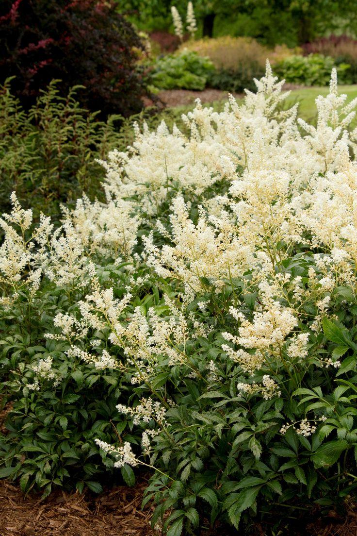 318 best garden images on pinterest for Hardy plants for the garden