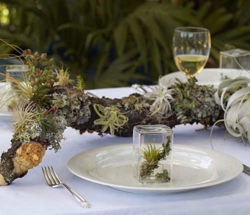 cover your driftwood in moss and air plants for a rustic touch at your beach wedding