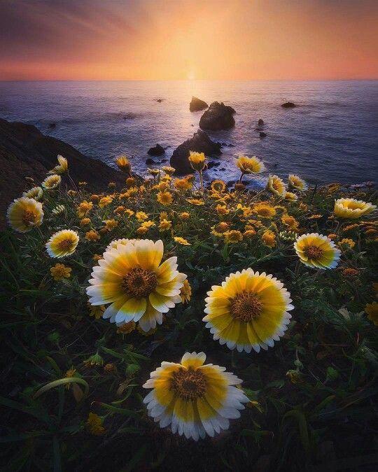 Sharp Park Beach, Mori Point, Pacifica, California