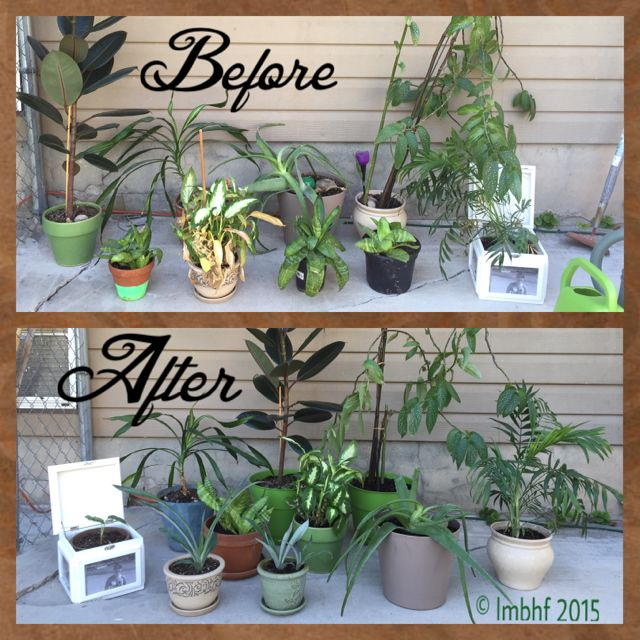 Re-Potting - Before & After