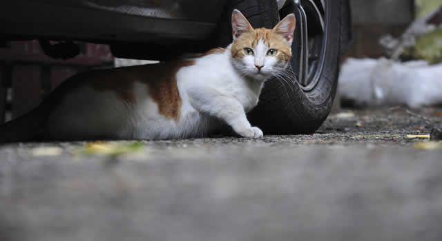 Um projeto de lei que prevê penas rigorosas de prisão para pessoas que maltratarem animais foi aprovado na quarta-feira, 29 de abril, na Câmara dos Deputados. A morte provocada de cães e gatos passa, agora, a implicar na detenção de três anos.