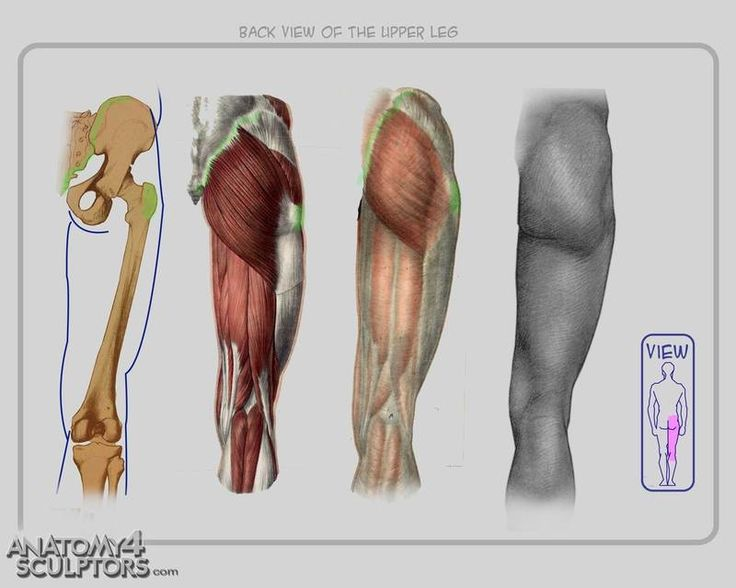 269 Best Anatomy Images On Pinterest Human Anatomy Anatomy