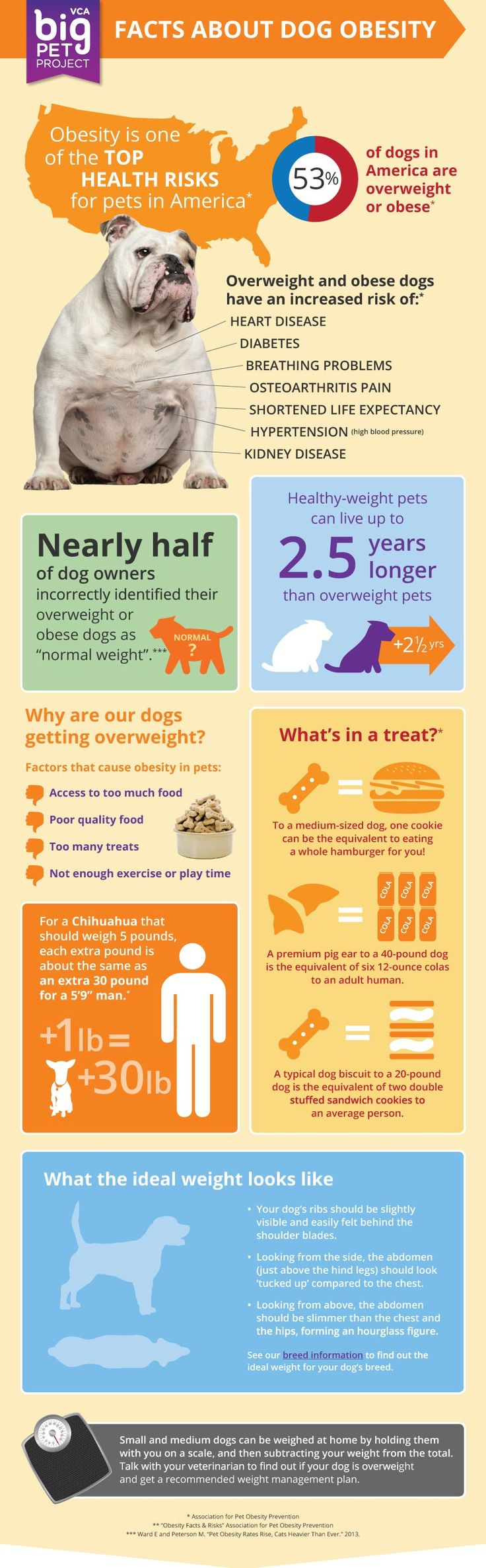 pet obesity The number of obese pets has increased every year for the past 6 years, and this trend shows no signs of abating.