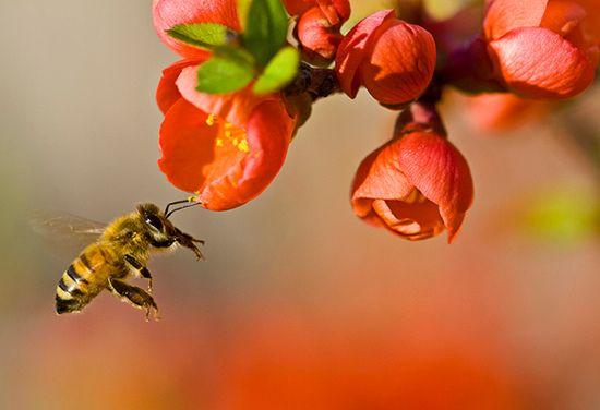 Μια γνωριμία με τη ζωή και το έργο της εργάτριας μέλισσας.