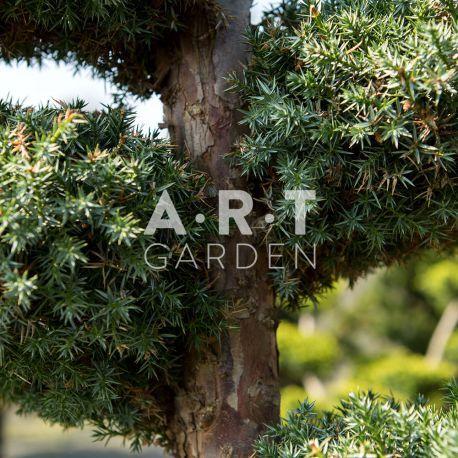 Acheter vos arbres chez le sp cialiste du jardin zen for Acheter un jardin zen