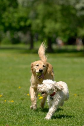 Gainesville Dog Friendly Parks