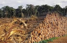 deforestation causes and effects essay