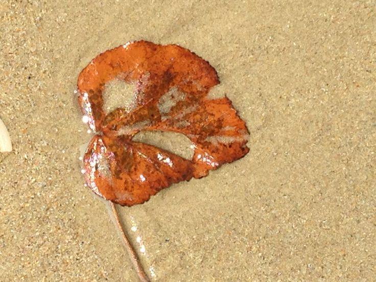 Colours on the Beach  ~  Maroochydore SE Queensland Australia