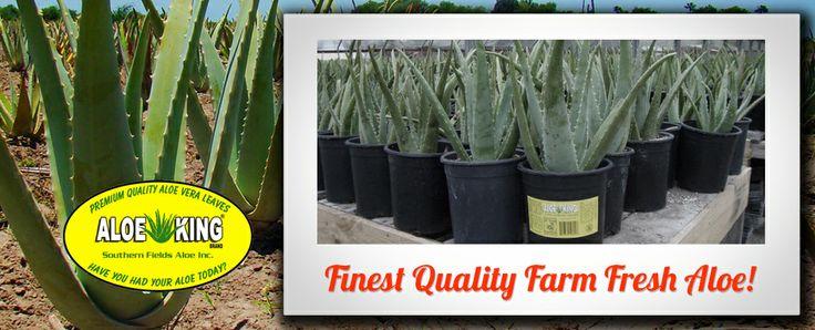 Aloe King - aloe farm and products
