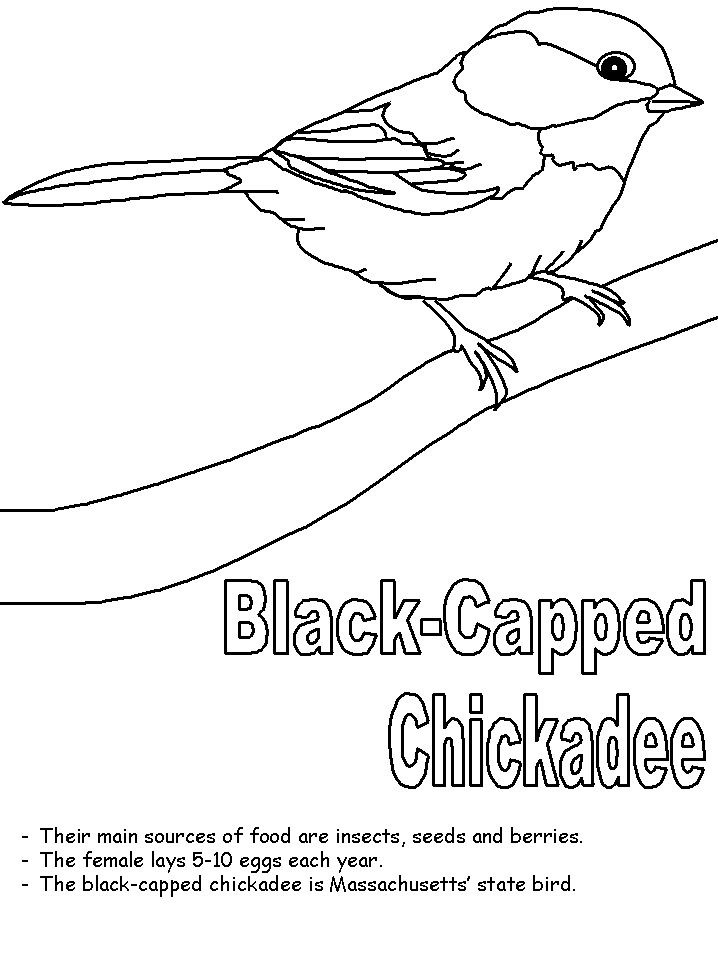 Black Capped Chickadee Coloring Page