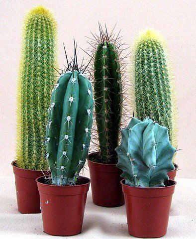 154 best images about cacti love on pinterest cactus for Wooden cactus planter