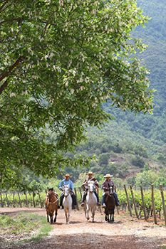 The New Positioning of Colchagua Valley, Chile | Chile Travel - Copyright © 2012/2013