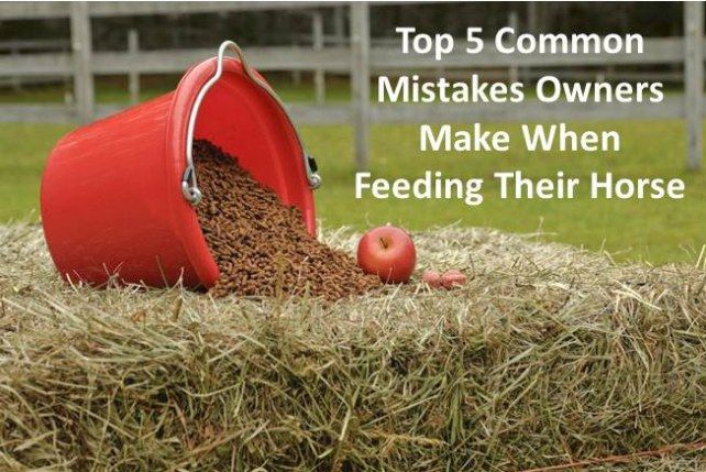 Common mistakes owners make when feeding their horse -EcoEquine