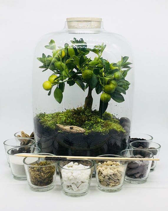 Terrarium Kit With Large Glass Jar And Concrete Lid Terrariums