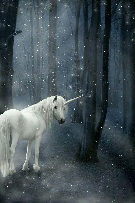 2017/07/01 Winter Unicorn in the Snow