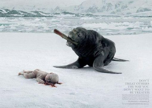 The message of the ad is don't treat others the way you would not like to be treated. It is a form of shock advertisement showing humans at the other end in this case a baby that was I believe being hunted as animals are.