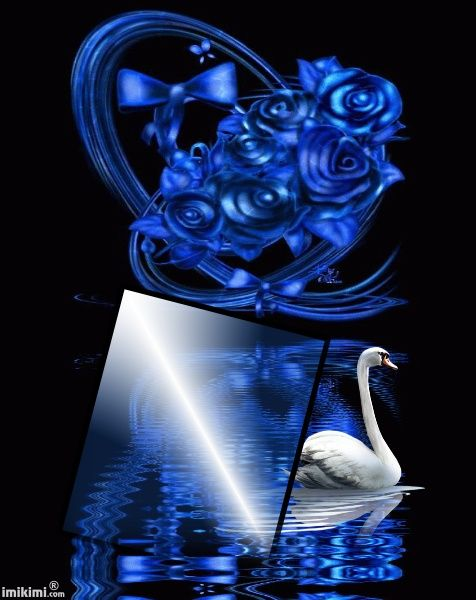 Blue roses kimi. Click to add a photo of yours to this photo montage. Love the swan.