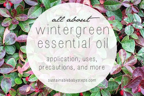 Learn about wintergreen essential oil for joint health, flavoring, and more, via SustainableBabySteps.com