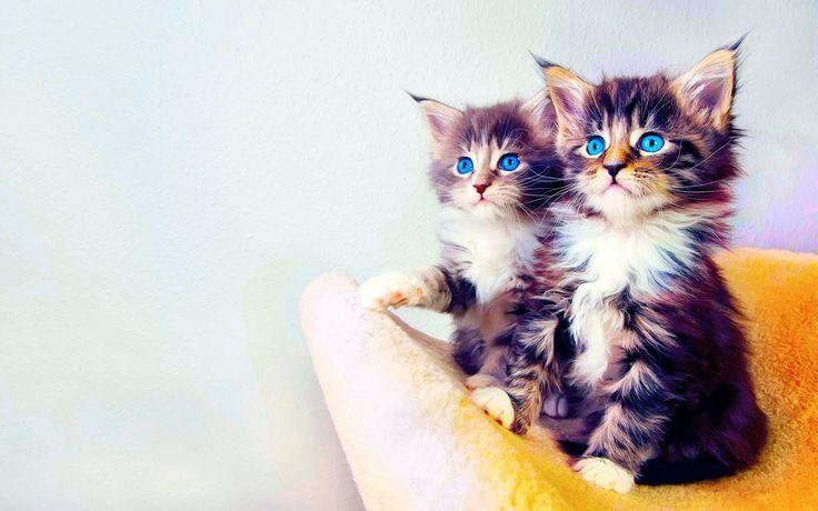 Tiere Katze  Kitten Indigo Tiere Wallpaper