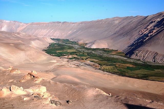 Verdor en el valle del Rio Lluta - Chile