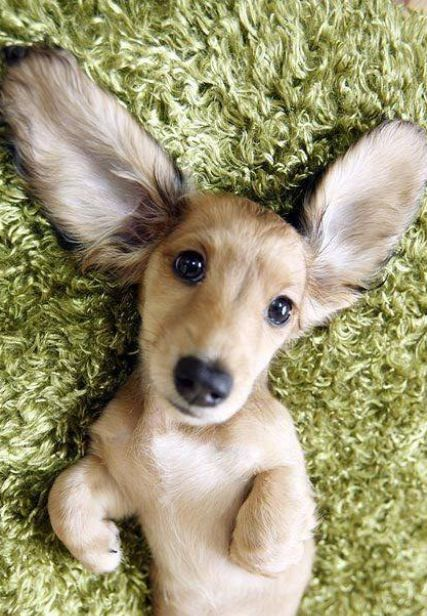 Oh my doggo!!! Bree123457