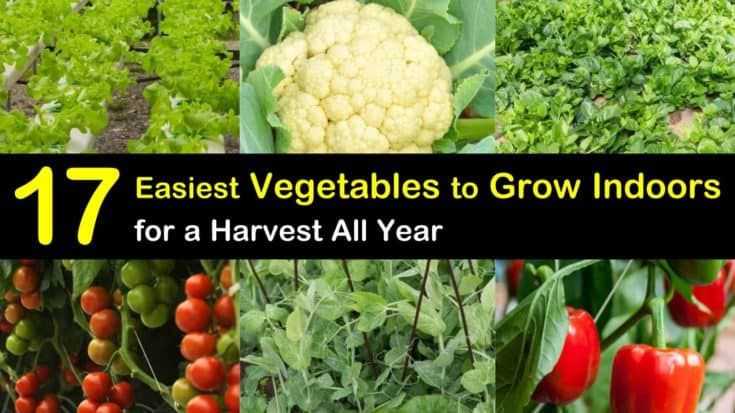 17 Easiest Vegetables To Grow Indoors For A Harvest All Year