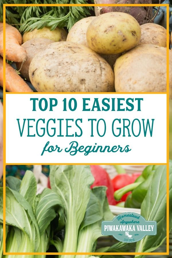 The 10 Easiest Vegetables to Grow for Beginners