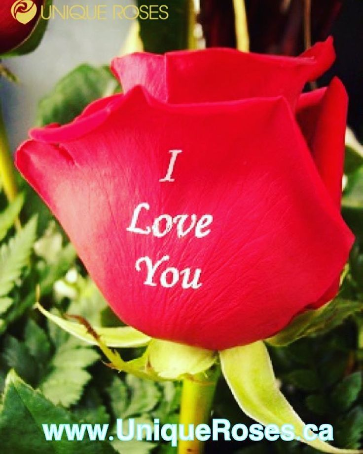 We Print On Fresh #Roses #Luxury #Design #Valentines #Gift #Love #Happy #Friendship #Toronto #Canada #Inspiration #Happy #Couples VISIT: www.UniqueRoses.ca