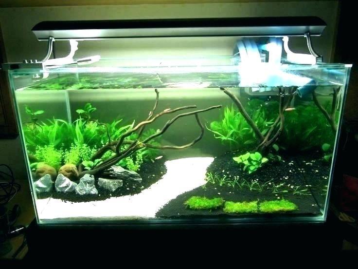 Aquarium Decoration Ideas Cool Aquarium Ideas Fish Tank Ideas Fish