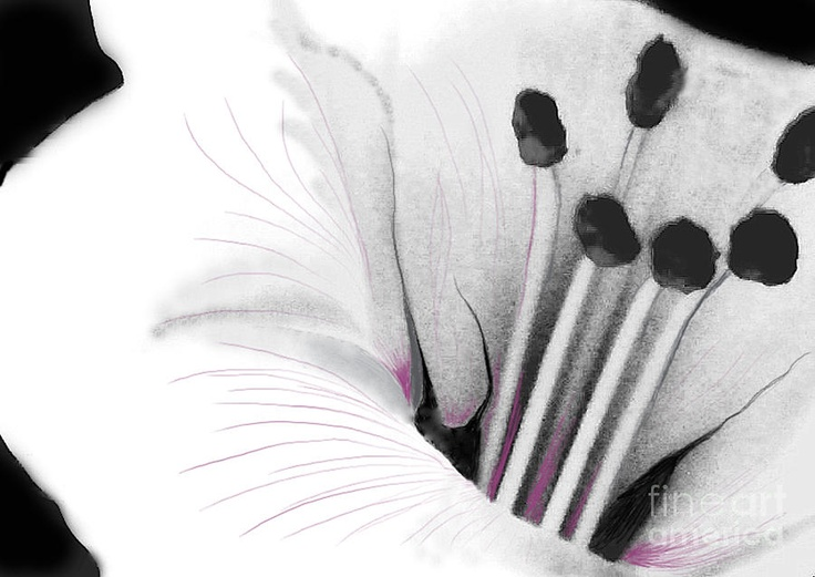 black and white flower.  digitally painted.