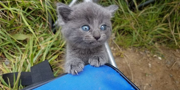 A man was out fishing by the lake when a tiny ball of fur scampered up to him, asking for attention. Who could possibly say no to that face?! imgur/radi0raheem Jason was very surprised when the kitten trotted up to him meowing for help. The little fluff ball tried to climb his bag, demanding...