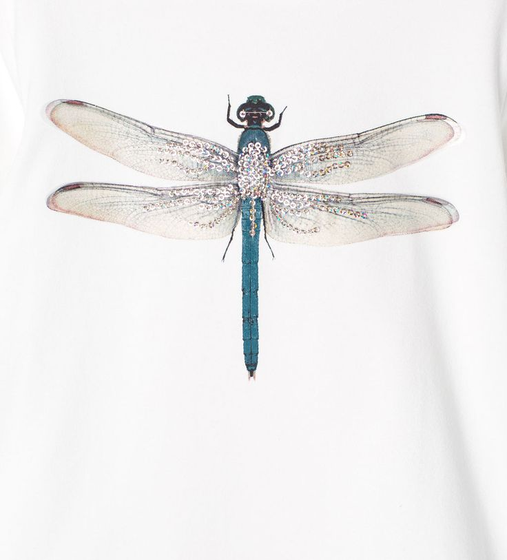 Image 5 of Dragonfly print T-shirt from Zara