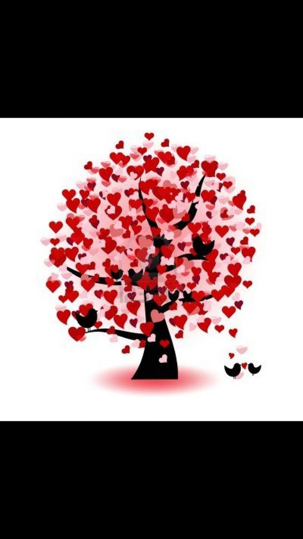 Valentijn boom. Kdn hangen er een boodschap aan en nemen er op Valentijn eentje vanaf.