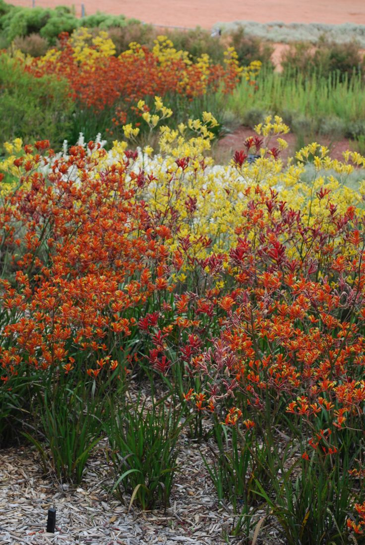 Garden Ideas Victoria Australia the 1763 best images about texas natives & drought tolerant