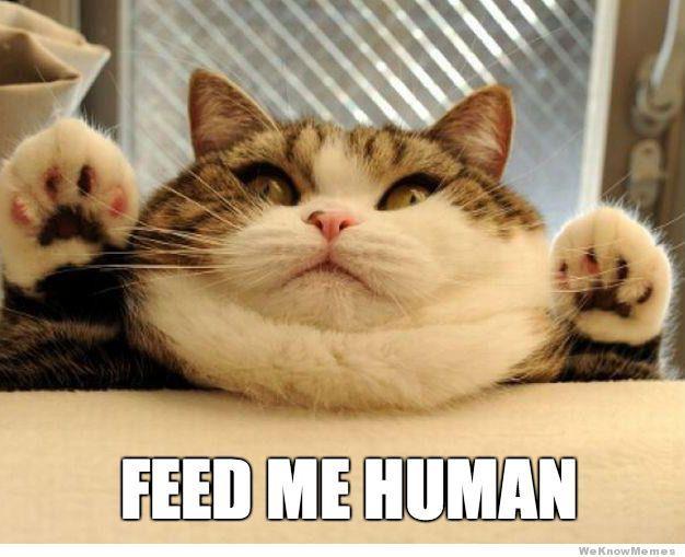 Fat Cat Heavy Breathing Meme