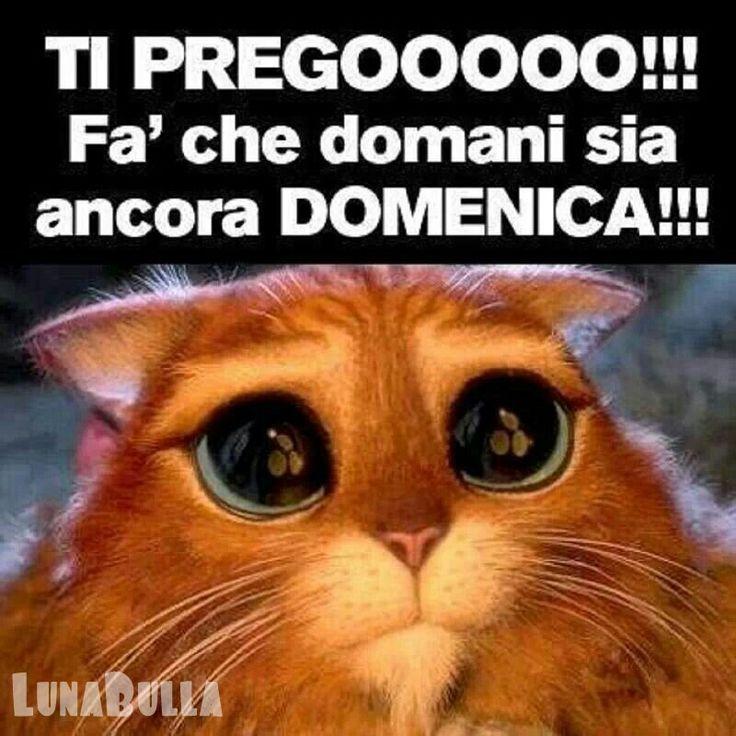 92 best images about buona domenica on pinterest for Immagini buongiorno divertentissime