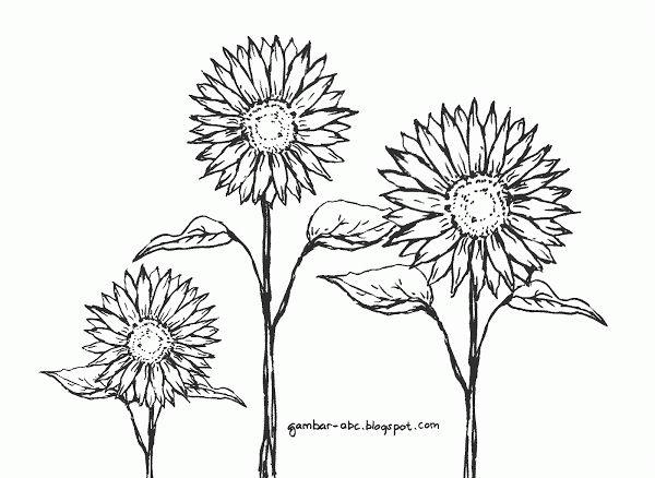 Contoh Gambar Mewarnai Gambar Bunga Matahari Gambar Mewarnai Pinterest