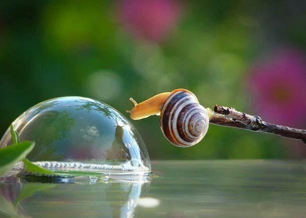 406 best Snails images...