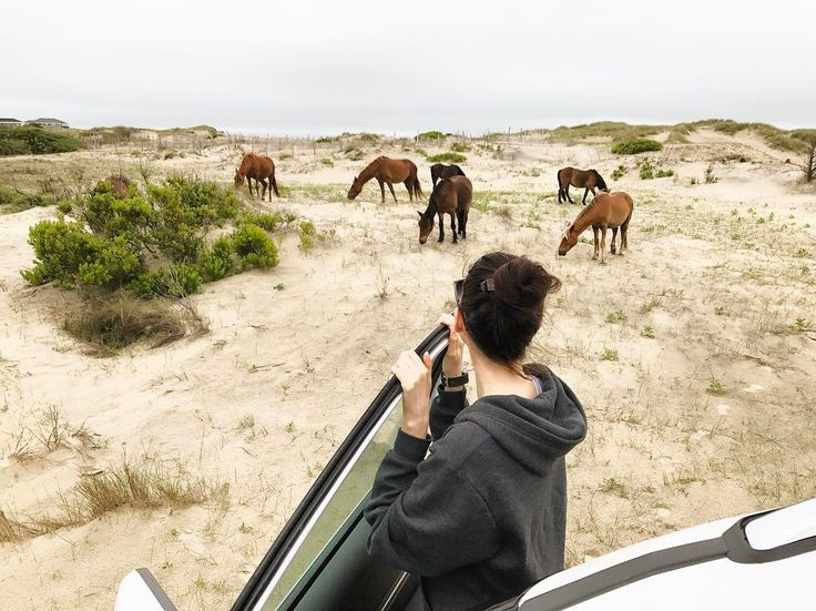 A day of adventure and delight! We went off-roading to find the wild horses we heard about that roam beaches and swamps on the northern end of Outer Banks. We were lucky to spot them and watch them for a while as they grazed. They started off far away and then slowly moved towards us as they grazed until they surrounded our car. They were so beautiful and majestic a pretty amazing experience!