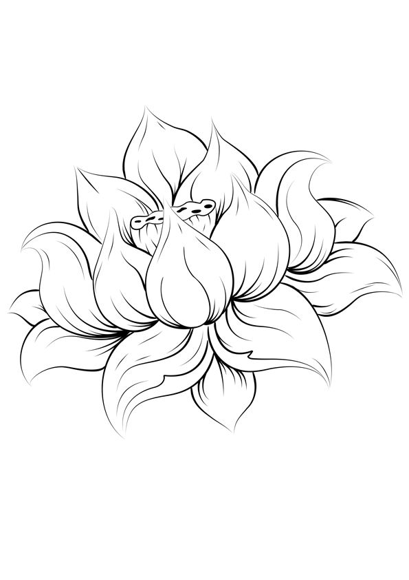 Dessin Fleurs De Lotus