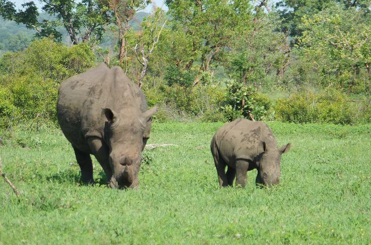 Sabi Sabi - Kruger National Park