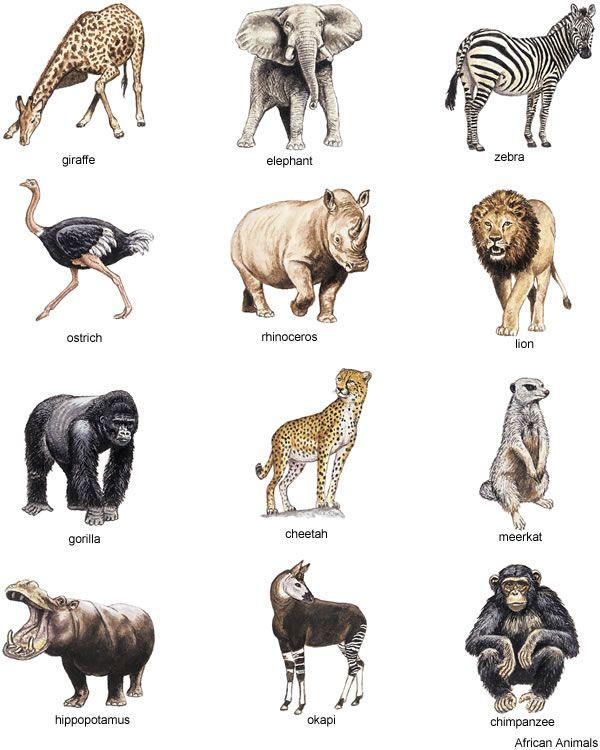 African animals, Animals and .