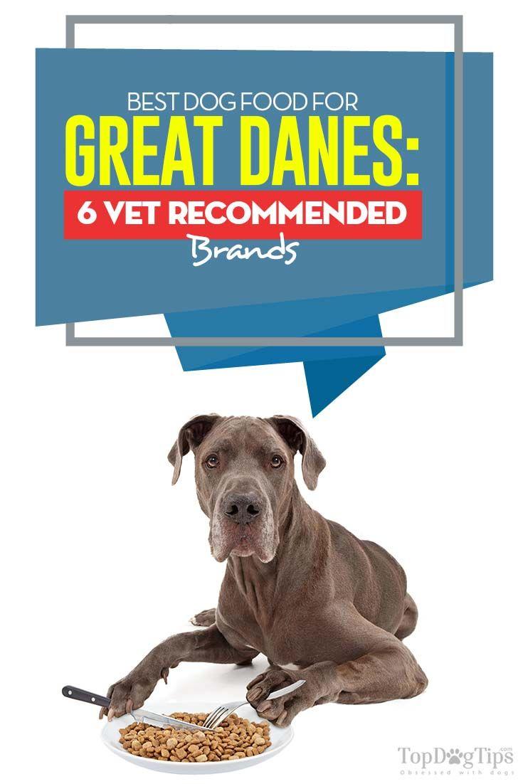 Best Dog Food For Great Danes 6 Vet Recommended Brands Dog Food