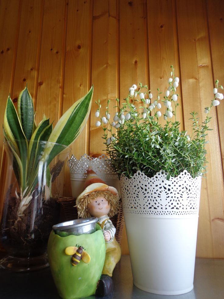 composizione con nuova varietà di erica dai fiori bianchi grandi