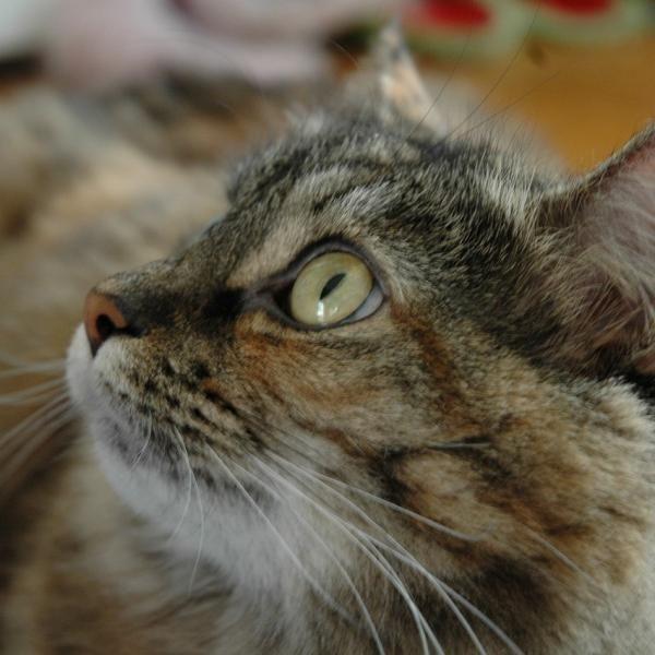 A sarna nos gatos - Sintomas e tratamento. A sarna é uma doença cutânea, causada…